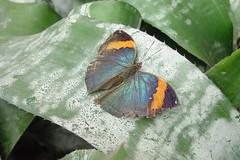 Butterflies #8