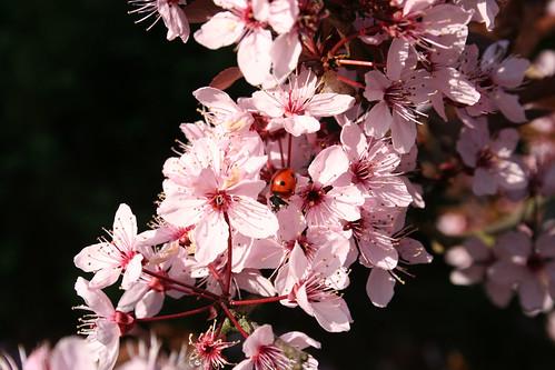 Hey! A ladybug!