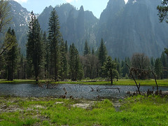 Yosemite - Swamp Sea