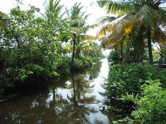 Backwater Tour near Cochin, Kerala