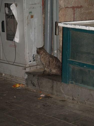 cat 246/248