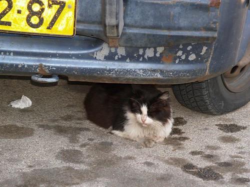 cat 1/248