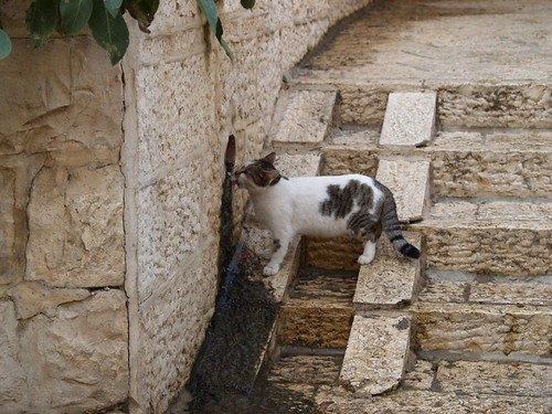 cat 9/248