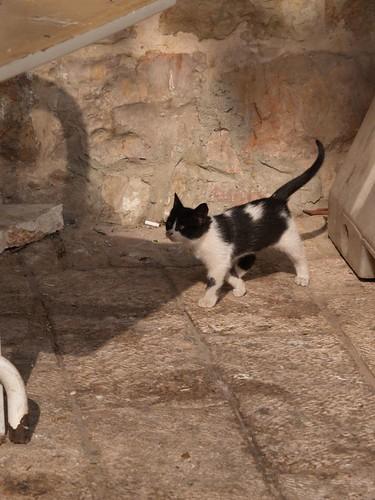 cat 15/248