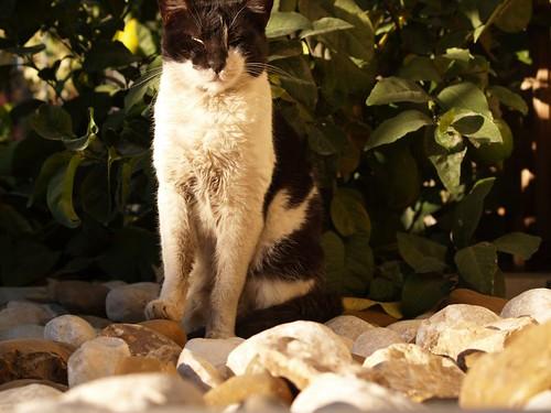 cat 43/248
