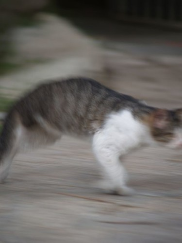 cat 135/248