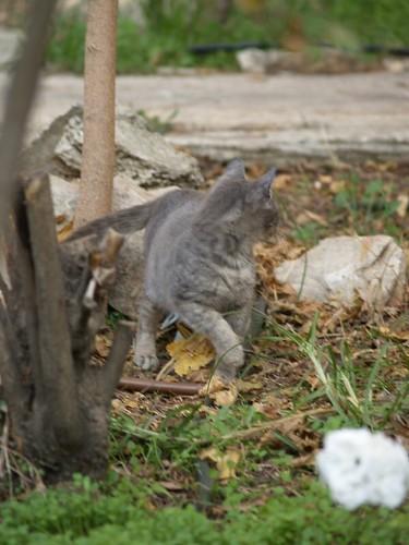 cat 134/248