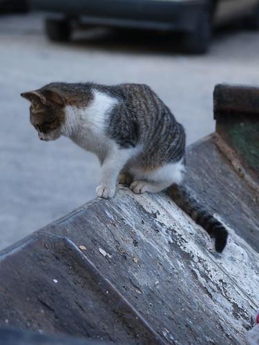 cat 173/248