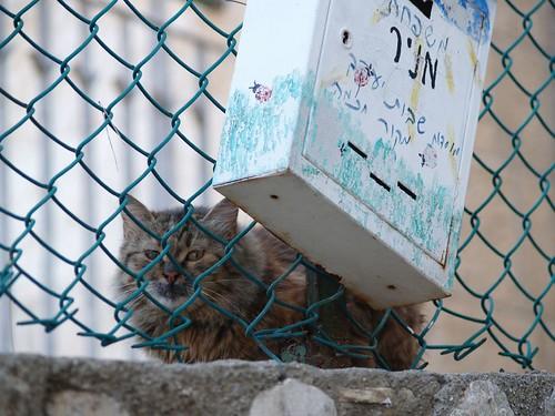 cat 170/248