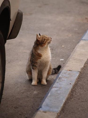 cat 196/248