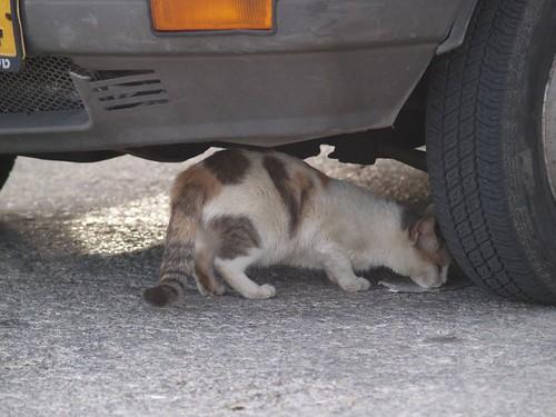 cat 204/248