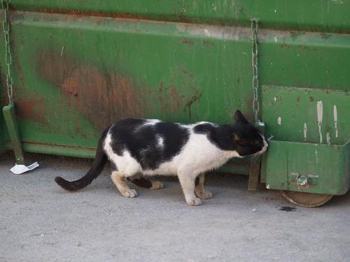 cat 223/248