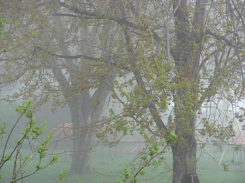 park fog
