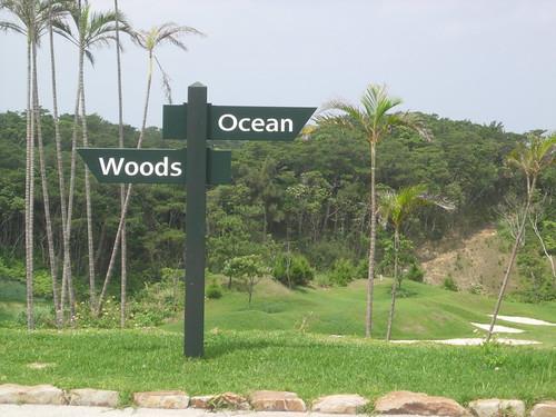¿Bosque, océano? class=
