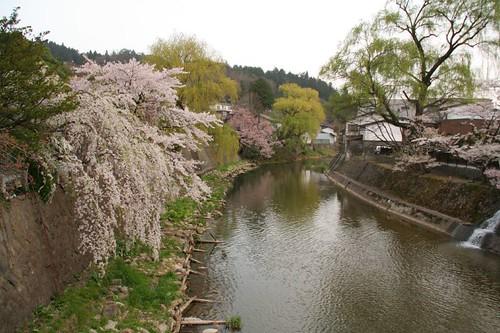 宮川、垂櫻、楊柳樹