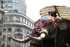 Elephant heads towards Piccadilly Circus