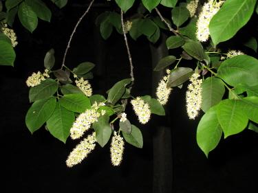 Night leaves 3