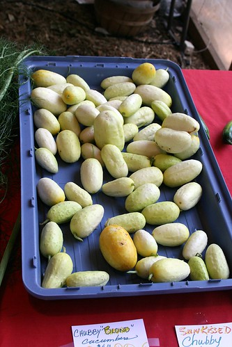 Golden Cucumbers