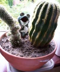 Cactus 15-05-06