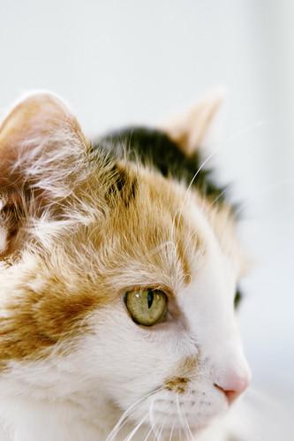 kicey kitten