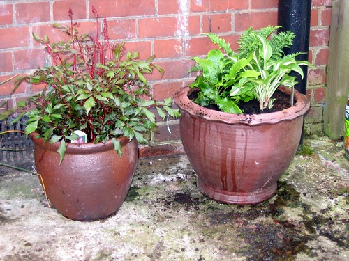 Astilbe and mixed pot...