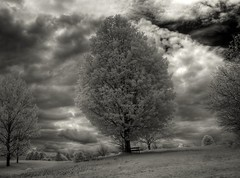 HDR IR Tree of knowledge
