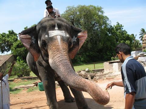 elephant-feed
