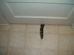 Allie's tail