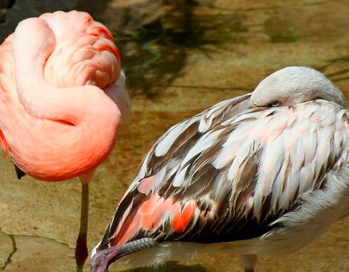 Black & White Flamingo