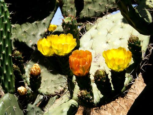 Flores de higos