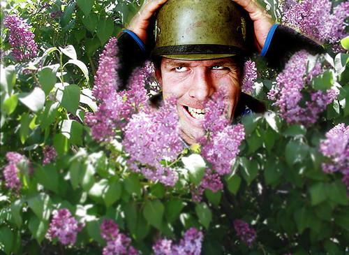lilac helmet