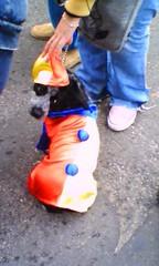 columbiandog