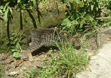 cat1_vol