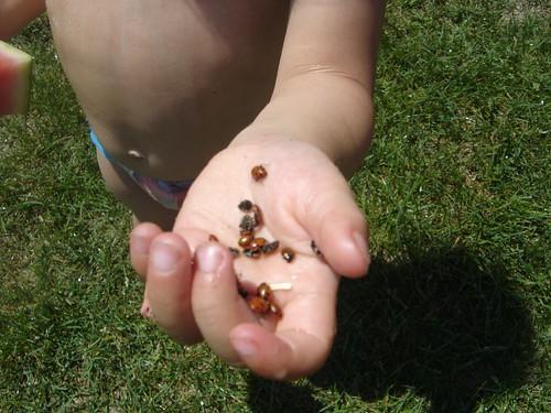 maddieladybugs