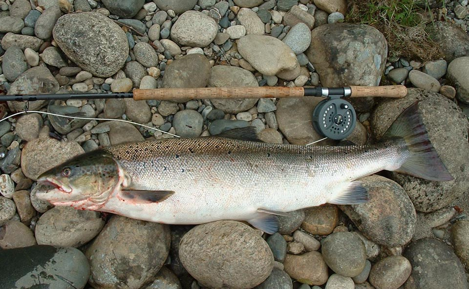 Salmon reels for Salmon fishing reels