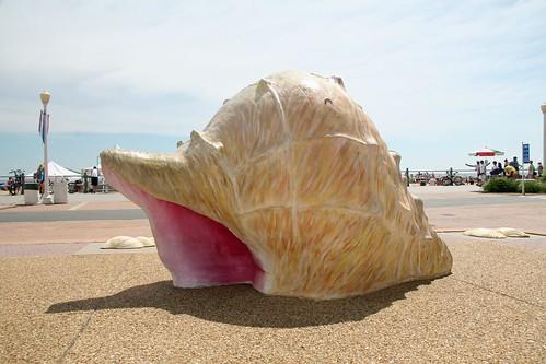 big conch