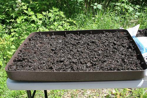 lettuce plot 5