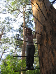 Anne on the Bicentennial Tree