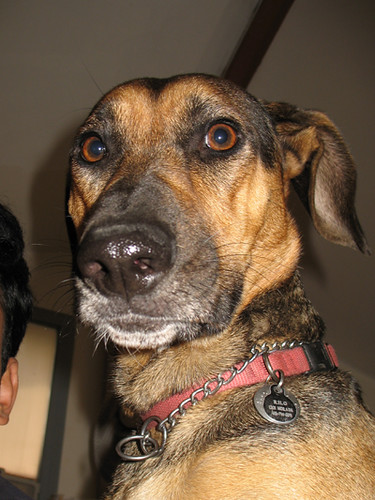 Fun! Help me name my new dog! | Forum | Archinect