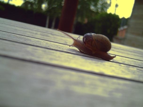 Glow on Snail
