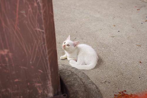 Today's Cat@20060710