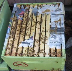 Beekeeping 2048