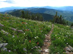 Trail through flowers just before summit.