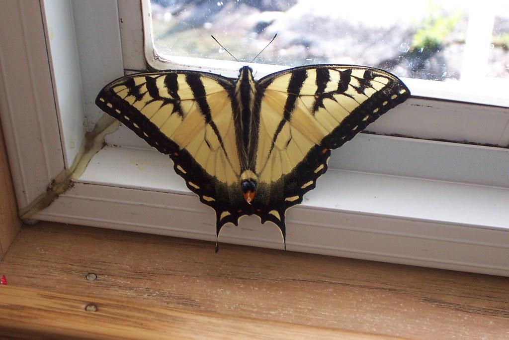 moe. moth