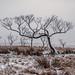 Saddleworth Trees