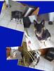 39398148734_cbd4250af5_t