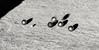 26239328978_27d9107dc7_t