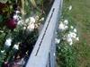 39092494531_9cd8640ec1_t