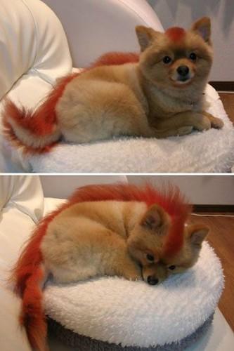 Baby Firefox
