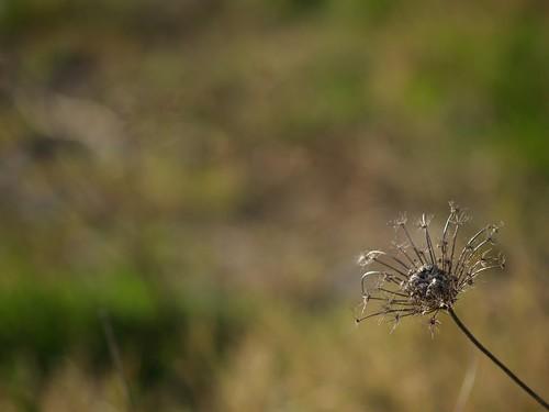 P3111500-flickr